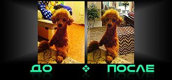 Фотошоп онлайн бесплатно сделает фон в Photo after